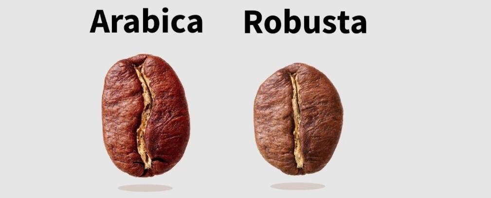 Arabica: aromi più piacevoli, robusta più corpo. Una maggior percentuale di quest'ultima può migliorare il nostro espresso da portare via