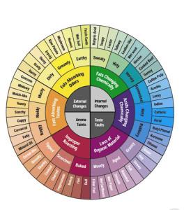 La ruota degli aromi del caffè, impariamo a leggerla...