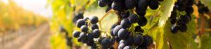 Conoscere i vini che proponiamo sarà fondamentale per proporli ai nostri clienti